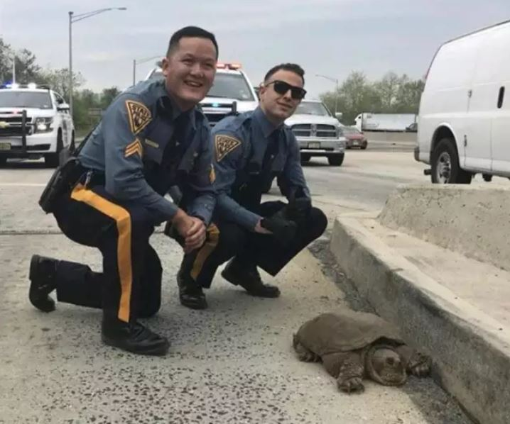 NJSP Snapping Turtle