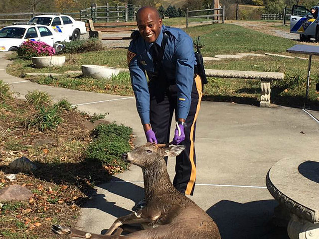 NJ Trooper saves deer