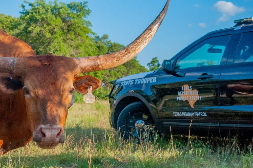 Texas DPS Highway Patrol